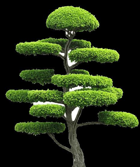 individuelle-pflanzen - Baum